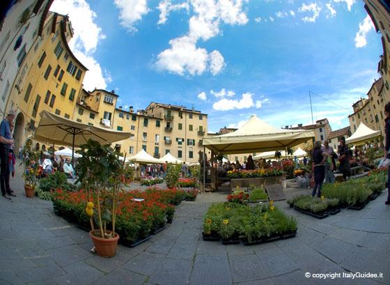 Lucca - Anfiteatro