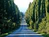 Bolgheri - Viale dei Cipressi