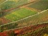 Toscana - Paesaggio del Chianti