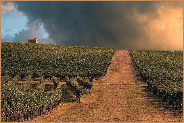 Toscana - Via del Chianti